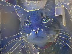 Heavily Processed Tigger 2 (sjrankin) Tags: 20july2018 edited animal cat yubari hokkaido japan processed filtered tigger chair kitchen closeup