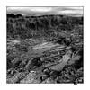 Trainées dans la boue (gravelin.yves) Tags: paysage boue champs nikon