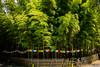 (Dubai Jeffrey) Tags: baohuatemple china muli bamboo buddhist jiangsu prayerflags suzhou temple 宝华寺