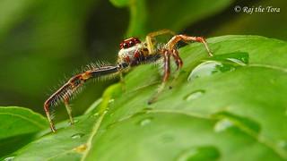 Spider Warning