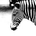 Wildlife. thumbnail