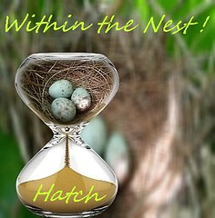 Moments Within Time ! (jlynfriend) Tags: phonephoto lg eggs bird mockingbird nest hourglass pip graphic image art