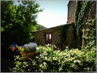 Fenêtre dans la verdure