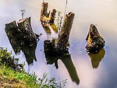 In a circle (cstevens2) Tags: fortvanliezele puurs boomstronk branch fortengordelrondantwerpen gracht langesluitertijd longexposure nature natuur tak treetrunk water reflections weerspiegeling
