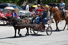 139th Annual 4th of July Parade (Adventurer Dustin Holmes) Tags: 2018 webstercounty missouri marshfieldmo marshfieldmissouri parade parades events independenceday outdoor 4thofjuly july4th annual 139th midwest horse equestrian domesticated domestic animal farmanimal farmanimals animals people wagon pony tiny small miniature overalls hat reins