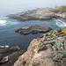 Point Lobos State Park - 11