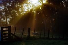 Kaipara Harbour, New Zealand (Ben Howe NZ) Tags: 35mmfilm analog auckland ektar100 fe2 kaipara newzealand nikkor85mmf14 nikon sunrise