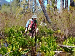 Janice searches the marsh (BC Wildlife Federation's WEP) Tags: nanaimo wetlandkeepers bcwf elkewind amphibians buttertubs marsh education wetland wep