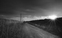 The road ahead (jan.arnds) Tags: grey tristess road rocks sand stones gras poles powerline sunbeams corn dust vanishing