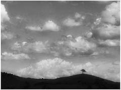 Day 298 Lone tree (Clare Pickett) Tags: blackandwhite mono one lone tree