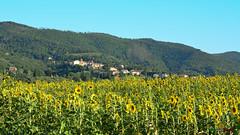 A-LUR_6408 (OrNeSsInA) Tags: panicale paciano trasimeno umbria italia italy natura panorami landescape