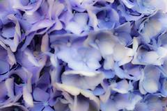 Kreative Unschärfe - Creative blur (Sharp - Shooter) Tags: unschärfe blur kreativ abstrakt flower