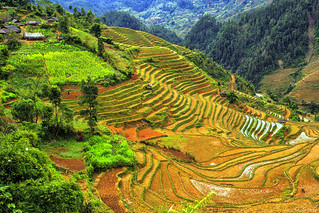 Explore  A wooden house on terraced rice fields in Mu Cang Chai© Jarmila