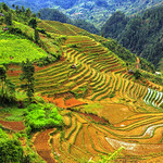 A wooden house on terraced rice fields in Mu Cang Chai© Jarmila thumbnail