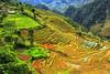Explore  A wooden house on terraced rice fields in Mu Cang Chai© Jarmila (@Jarmila) Tags: a wooden house terraced rice fields mu cang chai terrace vietnam explore autumn sapa