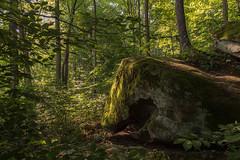 Primeval Forest (scott5024) Tags: salt fork state park ohio forest woods