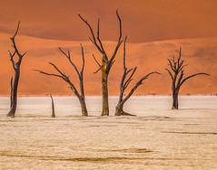 Deadvlei (judepics) Tags: africa deadvlei desert namibia petrified trees sossusvlei nature