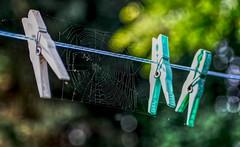 Cobweb (HSS) (KPPG) Tags: hss spiderweb spinnenetz bearbeitet processed sliderssunday cobweb 7dwf