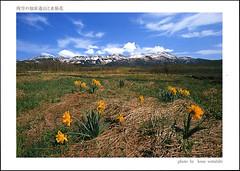 postcard - from akiko.s, Japan (Jassy-50) Tags: postcard postcrossing shiretokopeninsula shiretoko hokkaido japan mountains flowers unescoworldheritagesite unescoworldheritage unesco worldheritagesite worldheritage whs