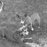 2 dogs 6 18 18 thumbnail