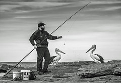Waiting for titbits (OzzRod (on the road again)) Tags: pentax k1 tair11a135mmf28 таир11а monochrome blackandwhite fishing angling fisherman birds pelican rocks merewether newcastle recreation