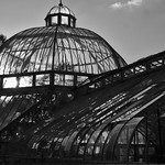 Abandoned Glasshouse Tollcross thumbnail