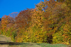 Trees on Mount Mansfield, Stowe, Vermont (Miche & Jon Rousell) Tags: usa fall autumn vermont stowe mountmansfield smugglersnotch statepark leaves red yellow orange trees hiking trail skiing skiresort