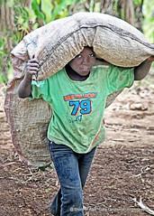 Farm Work (Gary Grossman) Tags: child boy labor load feed africa tanzania lufingo tukuyu rungwe village portrait garygrossmanphotography africabridge portraitphotography