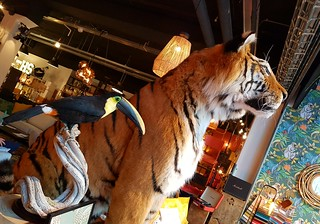 Brabants genot!! Guus Meeuwis is in Eindhoven en het is weer overal feest!! Ps: The tiger died from a natural couse. His name was Guus.