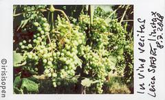 in vino veritas # 008 # Leica SOFORT Fuji instax mini color - 2018 (íṛíṡíṡôṗĕñ ◎◉◎) Tags: leica sofort fujifilm fuji instax analog color irisisopen