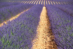 IMG_4091 (肉拉) Tags: valensole lavender france provence