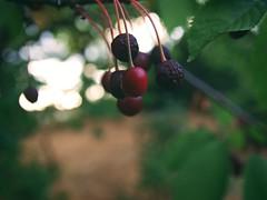 20180714-203230 - Fruit Nature Bokeh