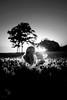 (tonyhoertrauschen) Tags: baltic balticsea light black white landscape travel tree sunset sunlight girl germany ostsee natural