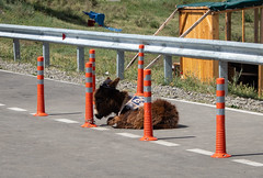 Morose (Giorgi Natsvlishvili) Tags: donkey ass sad saddonkey foal donkeyfoal georgia mtskheta stupidentrepreneur