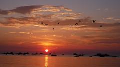 (An Arzhig) Tags: mouette santec finistère bretagne france panasonic lumix gx800 sunset boats birds orange micro43