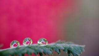 three drops - 5467
