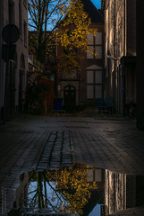 Autumn Ally Groningen (26-11-2018) by #MrOfColorsPhotography #PortfolioOfColors #InspireMediaGroningen (mrofcolorsphotography) Tags: november groningen mrofcolors mrofcolorsphotography journeyofcolors journey colorful colour colourful colours scene scenery leave leaf ally city streetphotography street streetphotographer streets canonnederland canon canonphotography canon80d cityphotography cityphotographer rain wet puddel water reflection reflections sunlight sun sunny sunshine cold portfoliofocolors portfolio portfolioofcolors dillenvandermolen thenetherlands netherlands holland instagram instagood photographer photooftheday photography photo photos autumn autum herfst