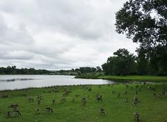 Le lac Josephine (Iris@photos) Tags: usa us montana billings lac josephine oiseau outarde