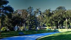 Parque - Park (Raúl Alejandro Rodríguez) Tags: parque park árboles trees palmeras palmtrees bancos benches farolas lamposts camino path plantas plants plaza intendente torcuato de alvear