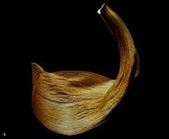 _DSC0064 - Feuille morte (Le To) Tags: nikond5000 nature naturemorte feuille feuillemorte macro