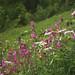 2 Rosa Blüten