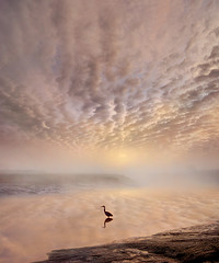 Hear the Silence of Nature (adrians_art) Tags: greyherons birds egrets rivers water reflections silhouettes shadows sky clouds patterns weather dawn sunrise foggy misty wildlife