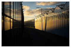 Westland sunset (leo.roos) Tags: westland monster sunset zonsondergang greenhouses hothouses glass reflection weerspiegeling kassen glas a7 helios77m45018 гелиос77m4 m42 vomz vologda russianlenses sovietglass darosa leoroos