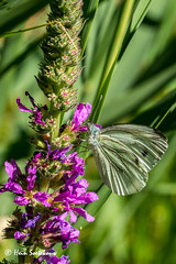 natuur- (28) (heinstkw) Tags: bloemen natuur natuurenlandschap vlinders vogels wat