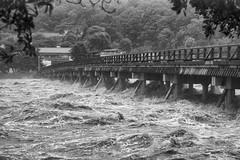 Typhoon (Andrew Allan Jpn) Tags: storm typhoon pentax pentaxart sigma 1750 travel kyoto flood swollen river bridge k3 rain