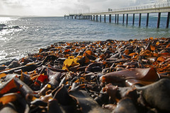 Kelp piled near the Pier (Greenstone Girl) Tags: greatoceaanroad lorne pier waves winter seaweed fff photowalk kelp fishing sparkle