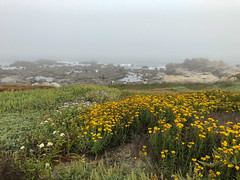 2018-06-30 19.18.22.jpg (david-meyer-photo-library) Tags: pacificgrove california unitedstates us