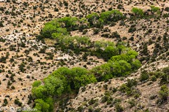 The S-Bend (Ralph Earlandson) Tags: coloradoplateau uthighway12 cottonwood desert tree utah dailyrayofhope2018 droh