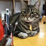 Tigger Contemplates the Pens thumbnail