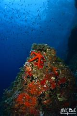 2018 Regional Murcia Fotosub As (Miguel Angel G. Murillo) Tags: azul oceano underwater ambiente mediterraneo fotosub fauna